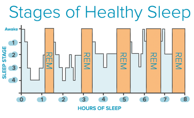 Stages-of-Sleep12